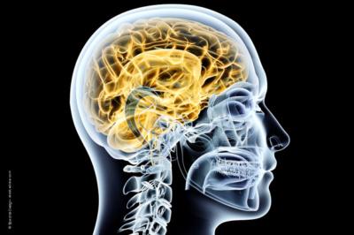 beitragsbild-neurologische-studie