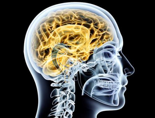 Neuroforschung: wie wir Werbung wahrnehmen